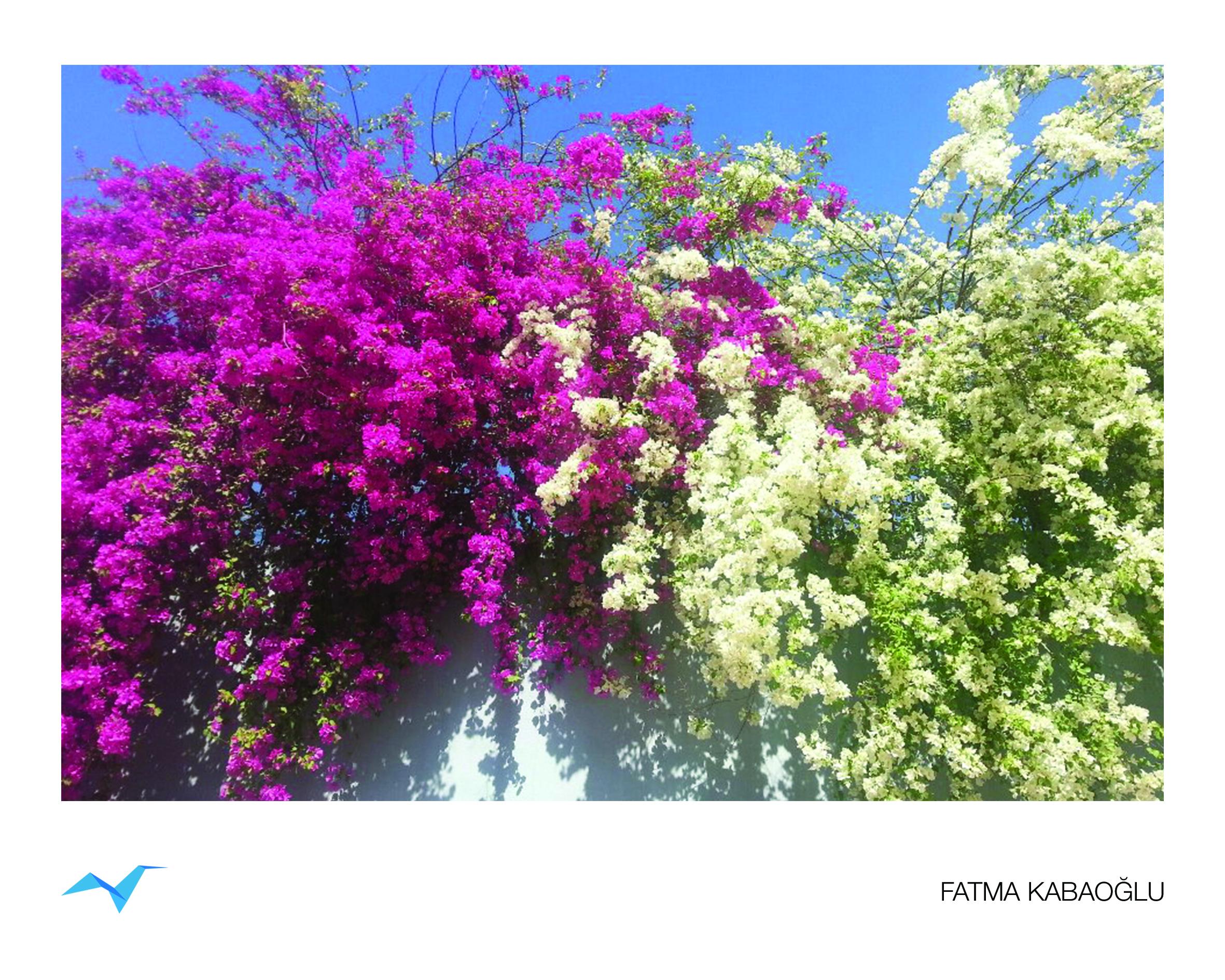 Fatma_Kabaoglu_3